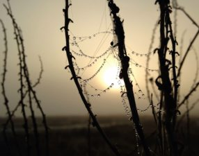 cobwebs, dew, macro, sky, waterdrops, wet branches