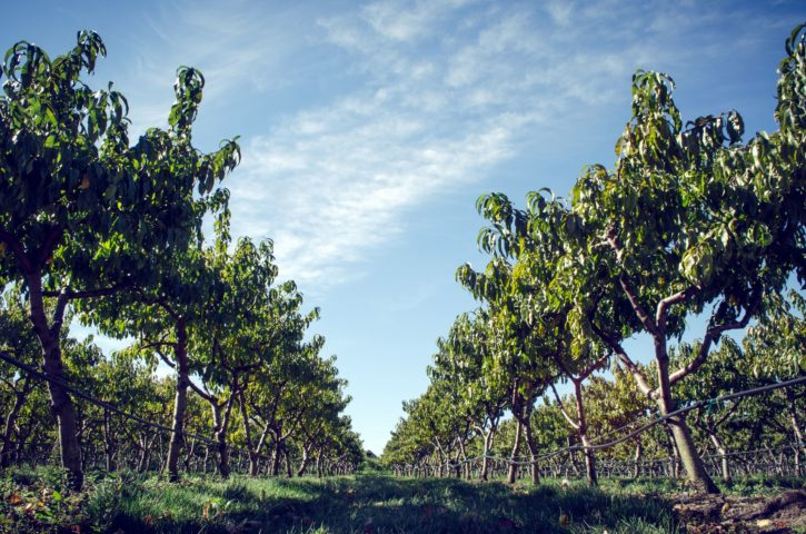 campagne, agriculture, environnement, verger, champs agricoles, zone rurale, les arbres