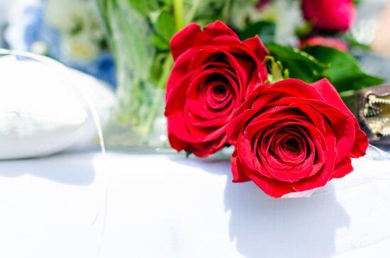 flore, rose, romantique, fleurs, frais, cadeau, anniversaire, floraison