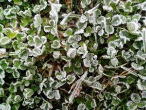 herbe gelée, le gel, la glace