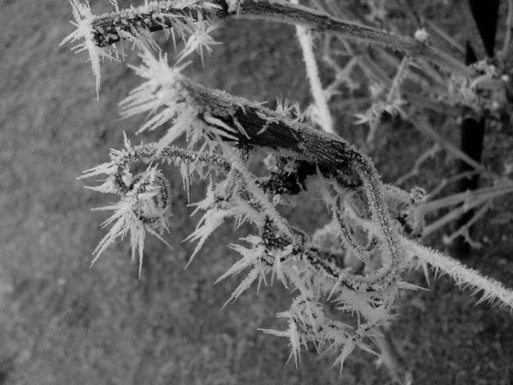 los árboles congelados, escarcha, hielo