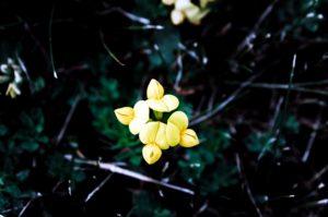 beau, floraison, fleur, flou, lumineux, couleur, coloré, délicat, flore