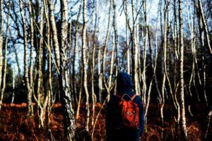 사람이 걷고, 숲, 추운 날, 환경