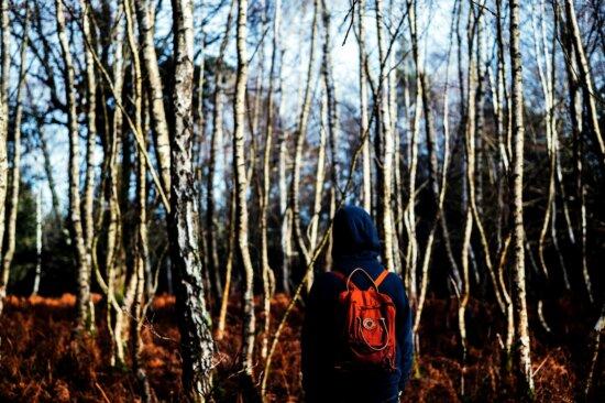 persona che cammina, boschi, giornata fredda, ambiente