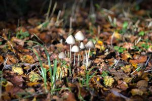 mushrooms, forest, autumn, fungus, grass, ground