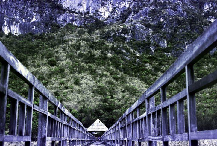 árboles, madera, puente, bosque, al aire libre