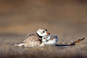 plumage, sand, seashore, animals, avian, beach, birds
