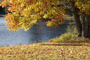 stagione autunnale, lago, alberi, acqua, caduta, fogliame, foglie, autunno