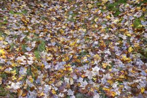leaves, ground, forest leaves, green grass, foliage, fall, autumn, leaves
