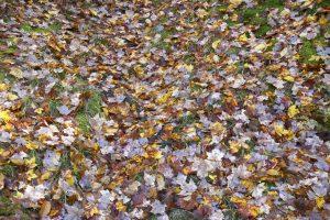 löv, jord, skog blad, grönt gräs, lövverk, höst, höst, blad