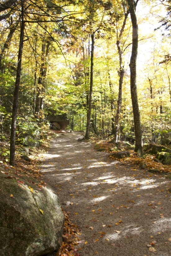 forest trail, forest path, leaves, hiking, foliage, fall, trees