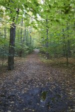 forest trail, woods, mud, road, national park, trees