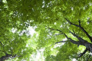 green leaves, dark green, forest, sky, trees, leaves