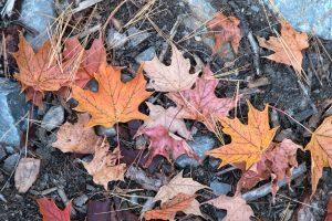 löv, höst, naturen, höst, falla, blad, löv, stenar