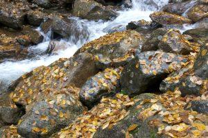pequeño río, arroyo de agua, hojas, follaje, caída, agua, corriente, rocas