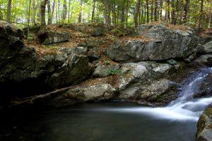 insenatura stagno, lago, foresta, acqua, rocce, alberi