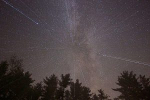 shooting stars, stars, night, forest