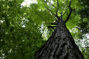 sous grand arbre, arbre de la forêt, nuages, ciel