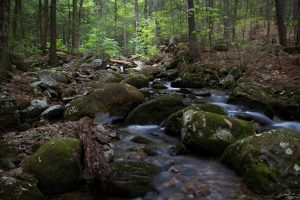forest river, creek, nature, landscape, stream, water, woods, rock, trees