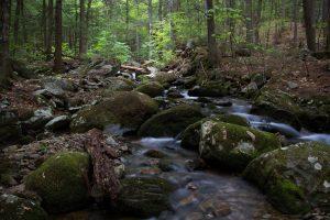 skov floden, creek, natur, landskab, strøm, vand, woods, rock, træer