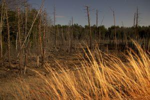 Dawn, letní forest, noc, hvězdy, stromy, tráva
