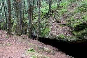 forest trees, woods, wild habitat, rocks, trees