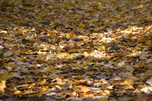 autumn leaves, foliage, road, path, nature, fall, autumn, foliage, leaves