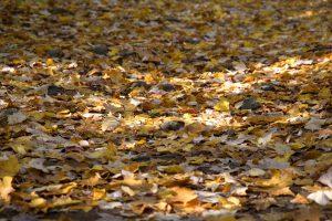 Blätter im Herbst, Laub, Straße, weg, natur, fall, herbst, laub, blätter