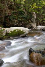 creek, river, water, rocks, trees