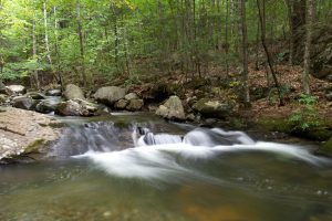 forest creek, river, water, rocks, trees