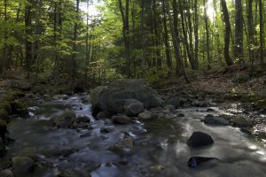 forest, creek, rocky river, nature, trees, stream, water