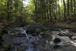Wald, Bach, felsigen Fluss, Natur, Bäume, Strom, Wasser
