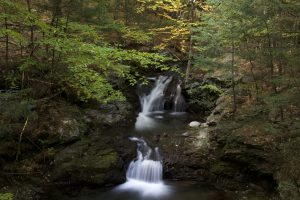 creek water, stones, water, trees, leaves