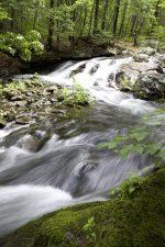 stream water, mountain creek, ferns, flora, spring time