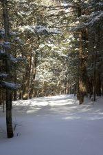 bài hát tuyết, rừng, tuyết, mùa đông, cây, đường dẫn, theo dõi