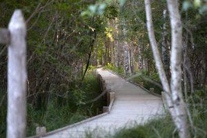 wooden bridge, national park, nature, landscape, hiking, trees