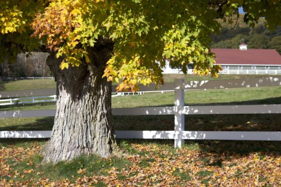 old tree, white wooden fence, foliage, fall, autumn, trees, fence, barn
