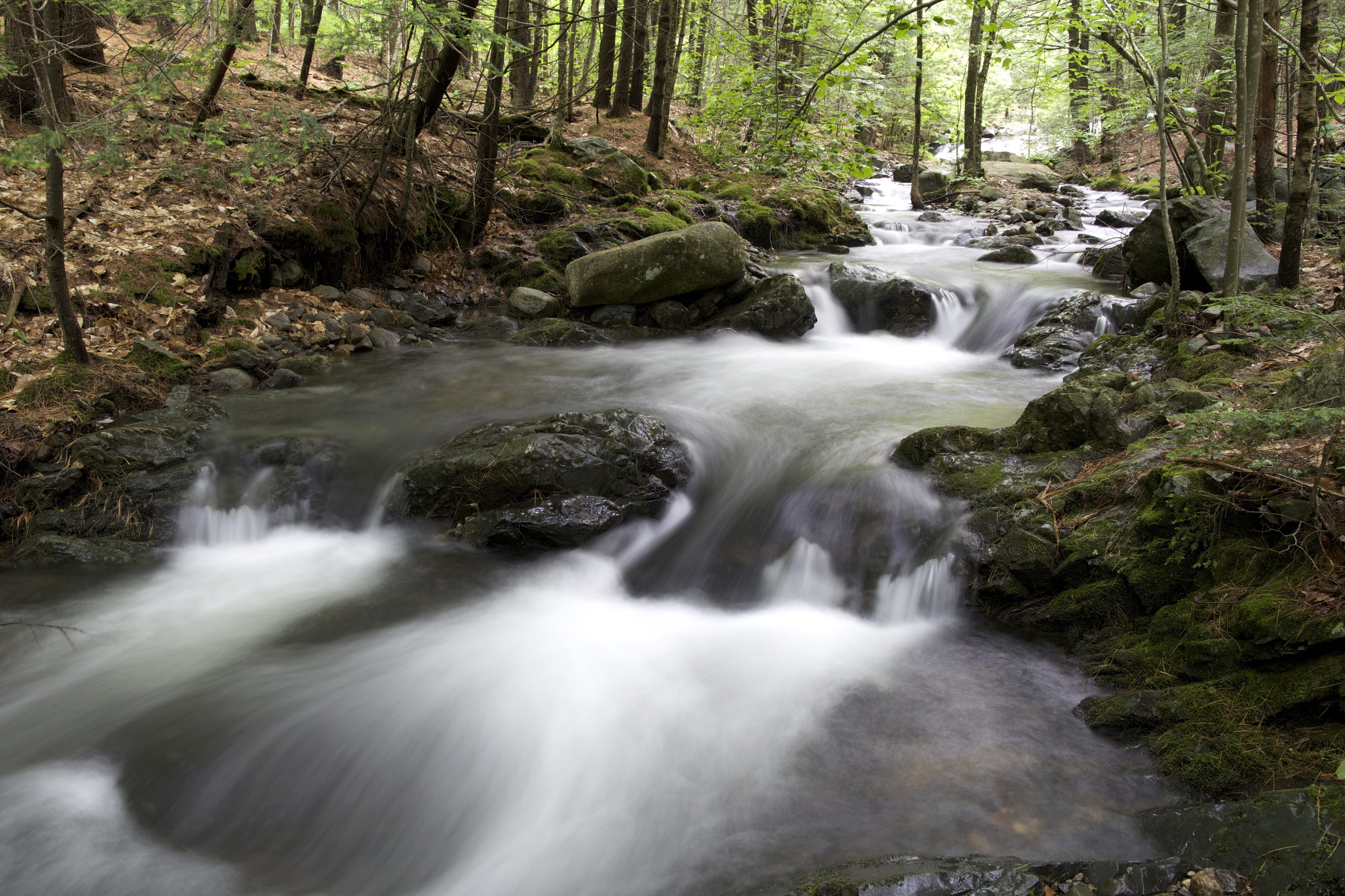 Kostenlose Bild: Bach, Bach, Fluss, Wald, Wasser, Bäume