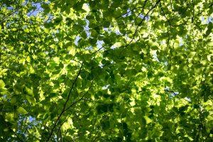 struttura, natura, foglie, alberi, la luce del sole