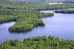 elven, skog, grønne trær, vann, lake, trær