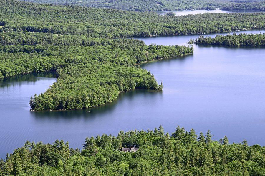 fiume, foresta, alberi verdi, acqua, lago, alberi