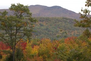 autumn, natural park, foliage, trees, mountains