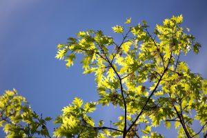 treet, natur, blader, trær, himmelen, sommer