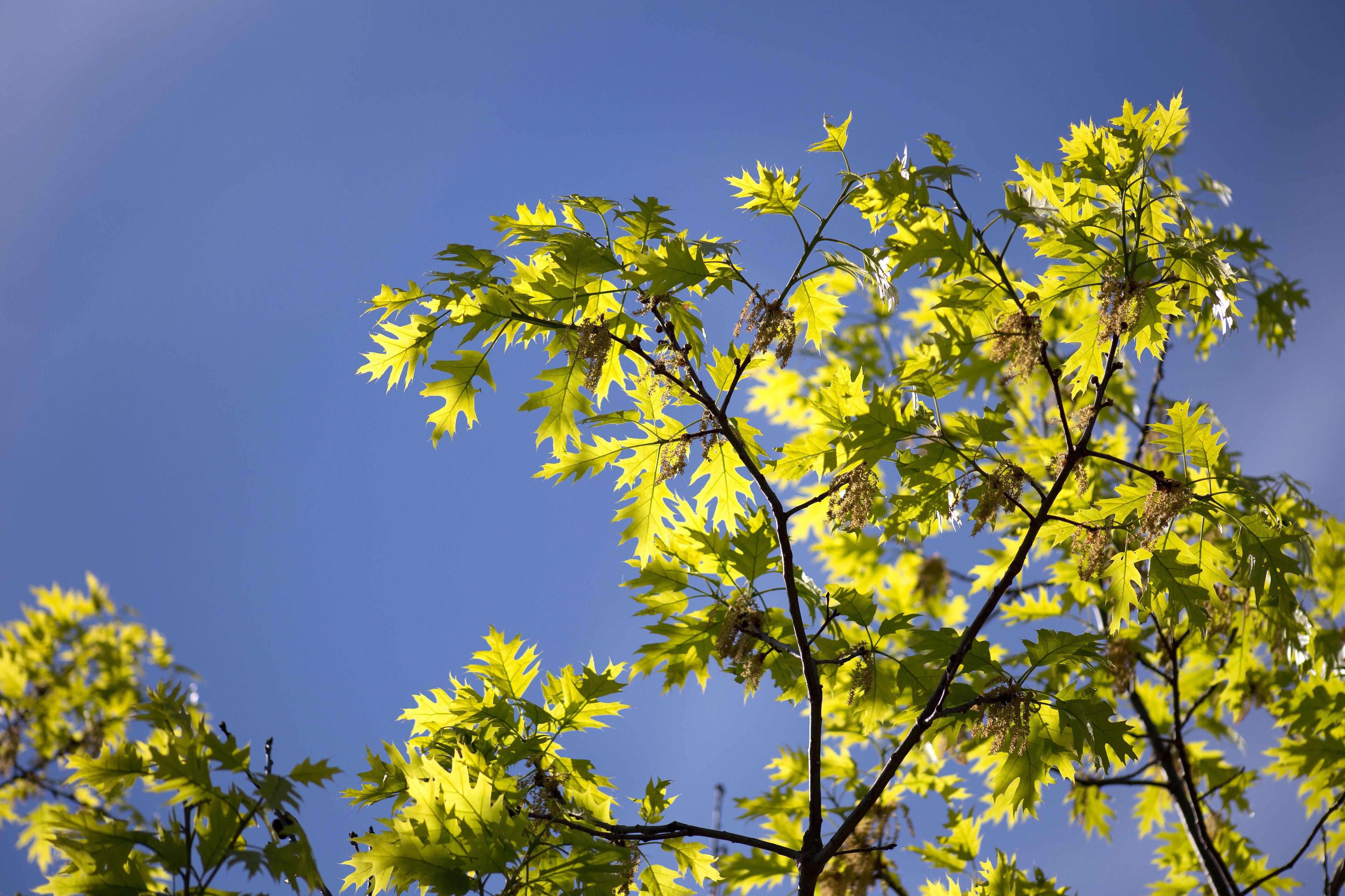 arbre nature feuilles arbres ciel t - Arbre Ciel