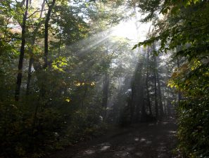 forest, sunrays, summer time, trees, sunlight, trail, summer