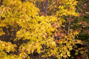 gele bladeren, herfst, loof, bladeren