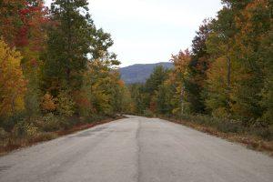 cesti, šumsku cestu, jesen, stabla