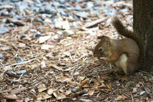 cute squirrel, squirrel animal