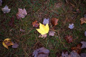 oscuras hojas, hierba, hojas, caída, follaje