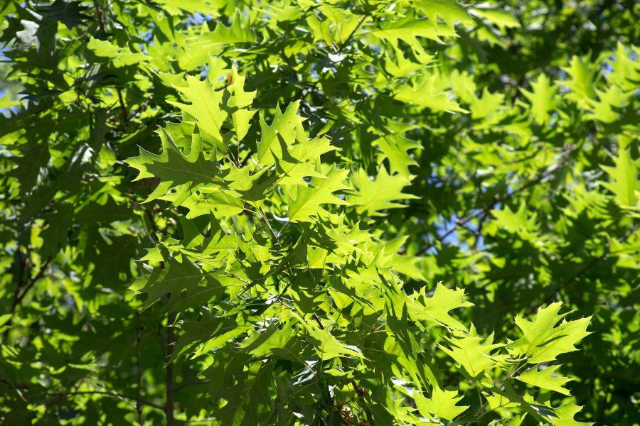 gröna blad, textur, natur, blad, träd, sommar